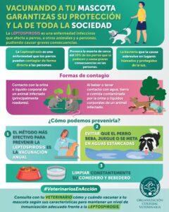 Leptospira - Centro Veterinario Valdespartera